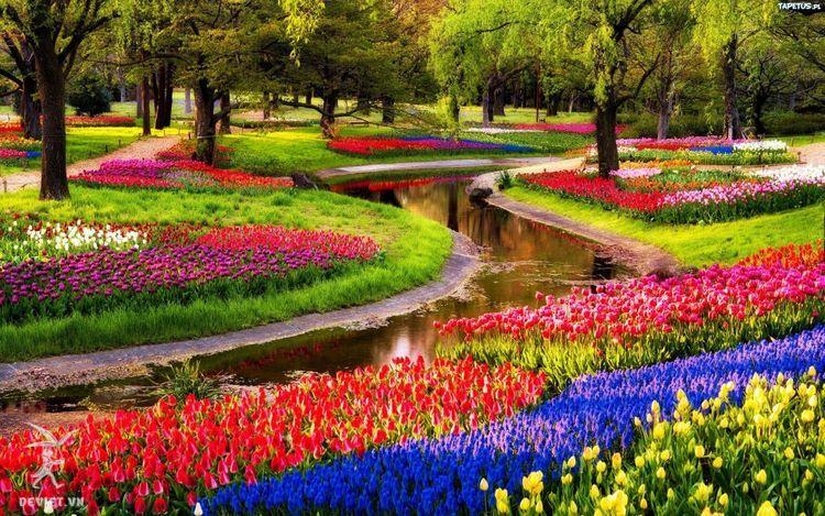Vườn hoa Keukenhof luôn rực rỡ quanh năm