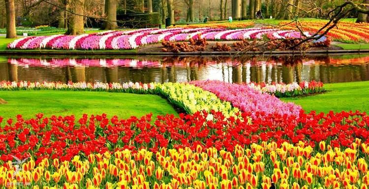 Khu vườn rực rỡ màu sắc của nhiều loài hoa