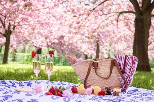 Những địa điểm tuyệt vời nhất để ngắm hoa anh đào khi đi du lịch Paris