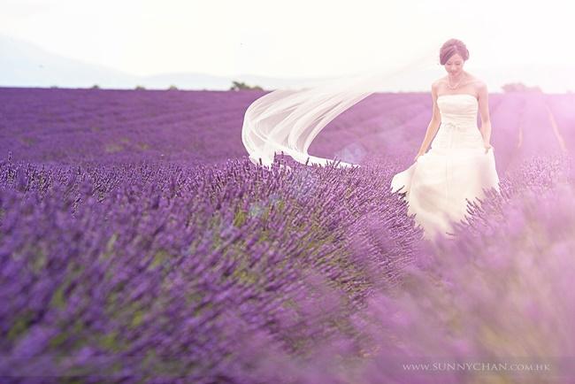Những bức ảnh cưới để đời trên cánh đồng hoa oải hương Provence