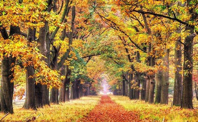 đất nước hà lan - vườn quốc gia hoge veluwe