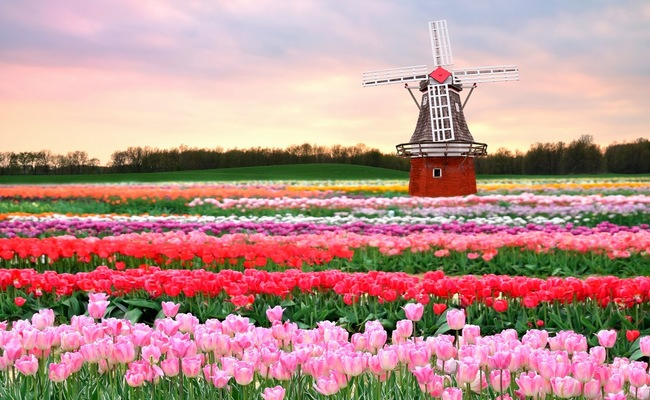 thành phố Amsterdam - vườn Keukenhof