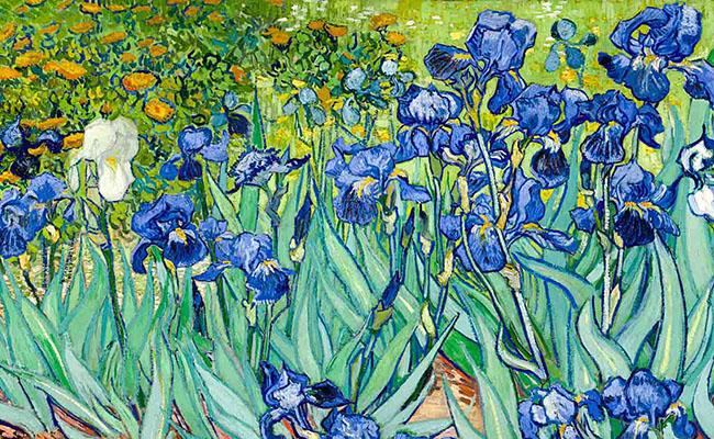Hoa diên vĩ đen ( hoa Lay ơn ) 1890