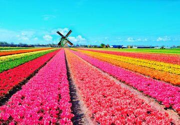 Tất cả những điều bạn cần biết khi tham dự lễ hội hoa tulip Hà Lan 2019