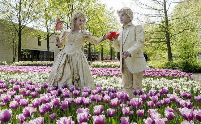 hoa tulip - keukenhof