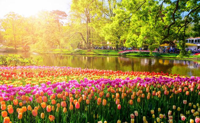 hoa tulip - vườn keukenhof