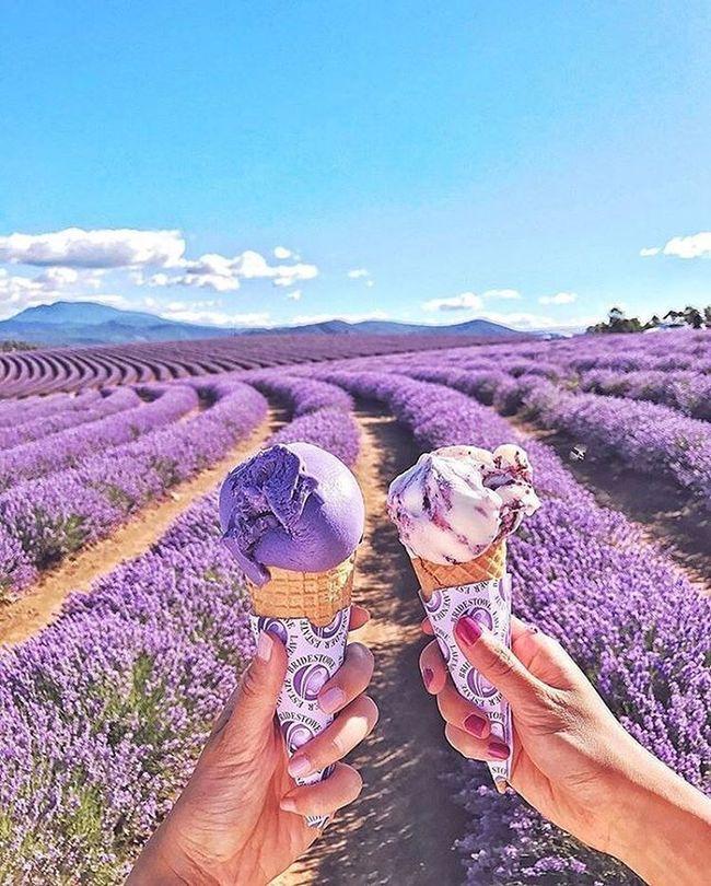 cánh đồng lavender pháp - món tráng miệng
