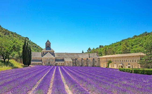 Cánh đồng hoa lavender bên tu viện Sénanque gần Gordes, miền Nam Pháp.