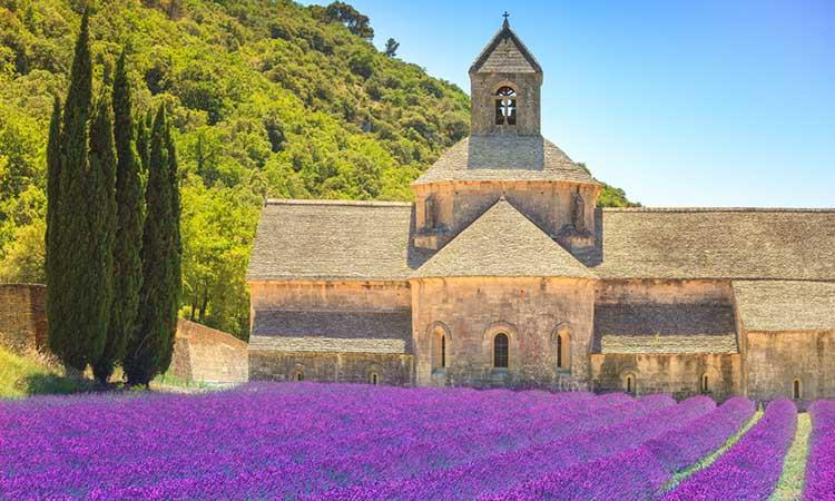 Hoa oải hương ở tu viện Abbaye de Sénanque