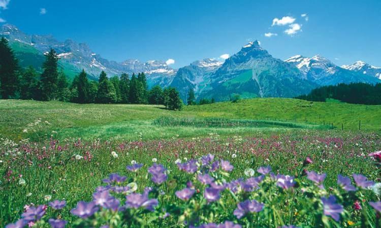 Hoa bạt ngàn thung lũng
