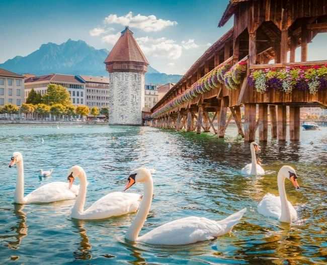 Chapel-lucerne-and-swans