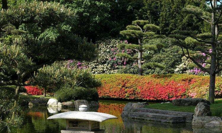 Trong vườn có hồ nhân tạo mang đậm dấu ấn Nhật Bản