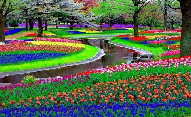 Keukenhof - một trong những vườn hoa lớn nhất thế giới.