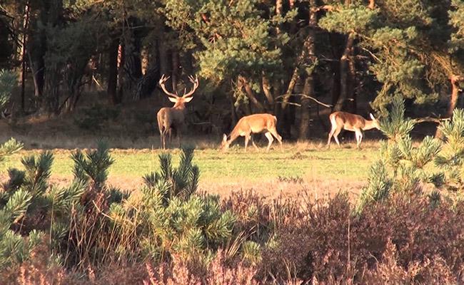 Công viên Quốc gia Hoge Veluwe