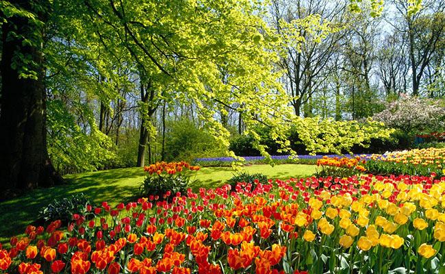 Khu vườn Keukenhof
