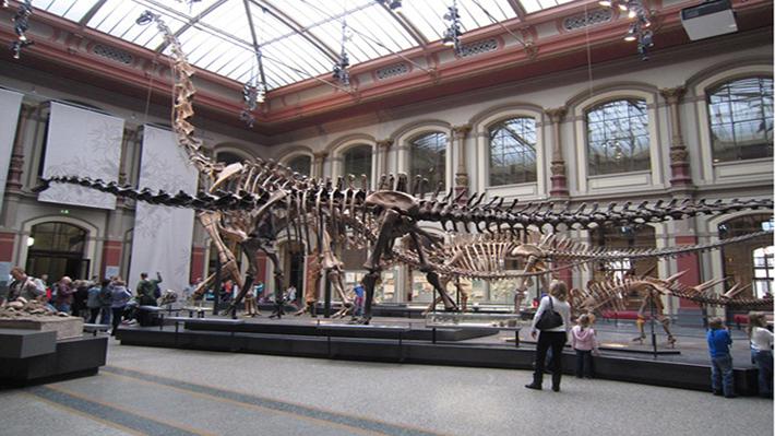 Bảo tàng Lịch sử Tự nhiên